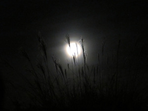 Full Moon through Cattails